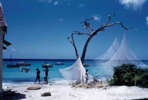 Caribbean Through a Lens | Blacknet UK